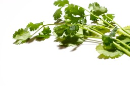 My love for cilantro.